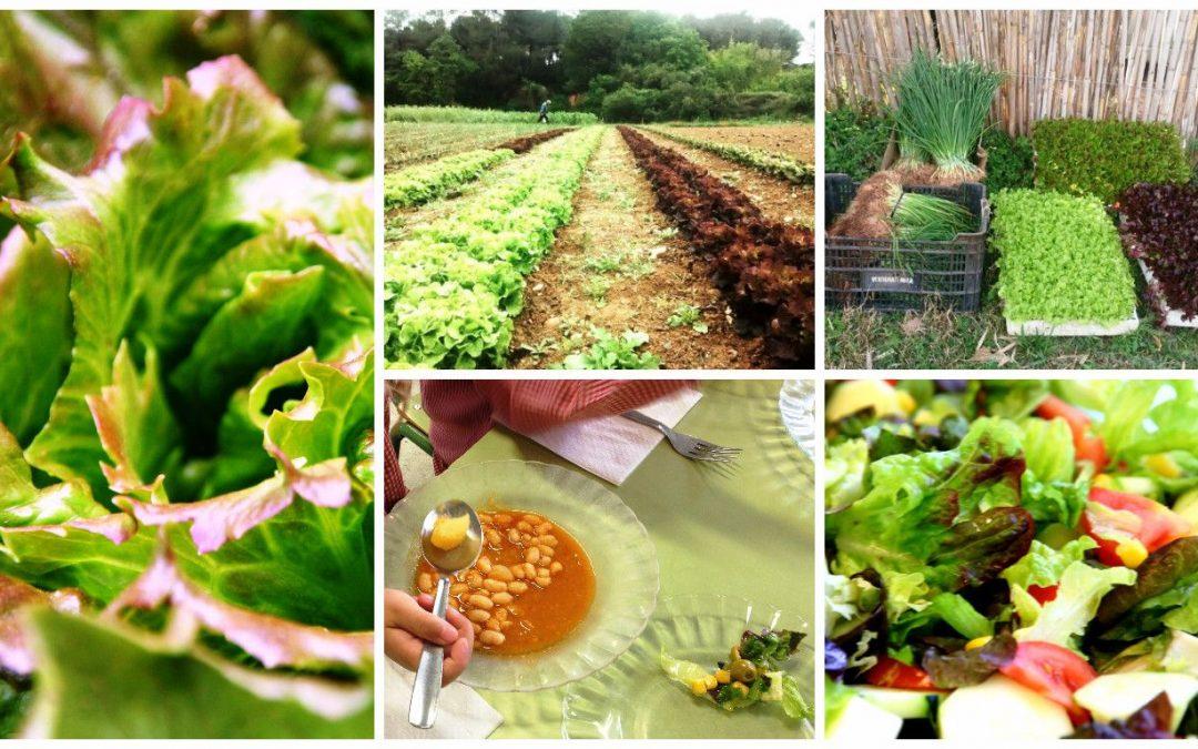 Tastem els enciams del projecte EcoBodum