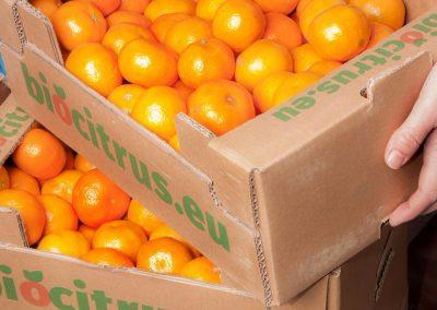 mandarines-ecologic