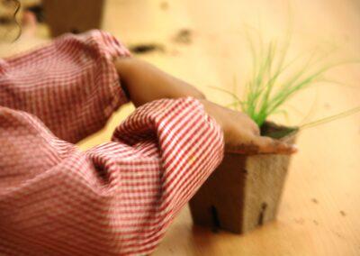 planter_aromatiques