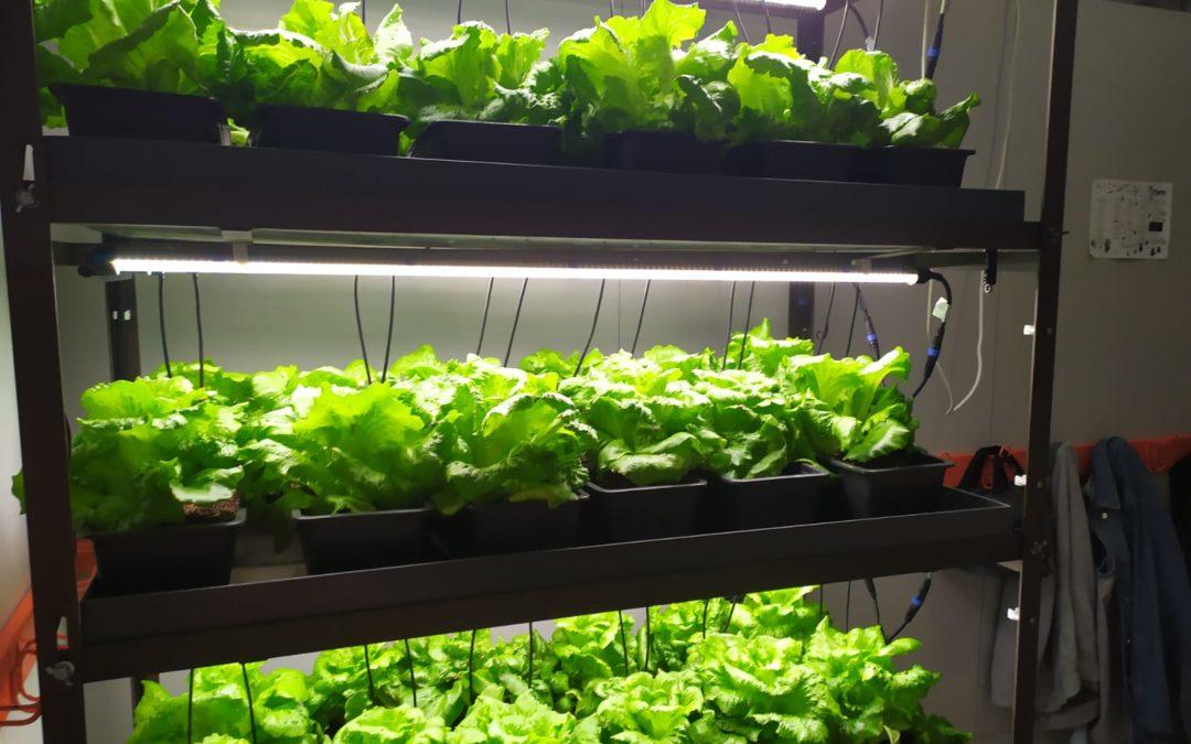 Colaboración con un proyecto de agricultura vertical